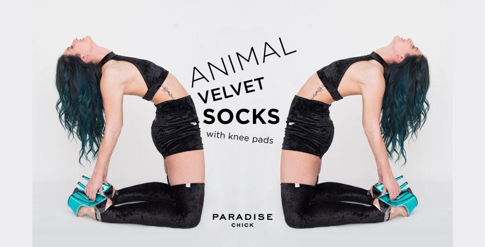 banner-animal